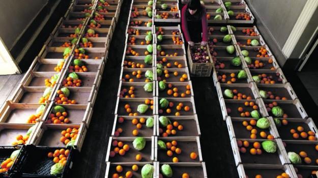 fruta feia cabazes